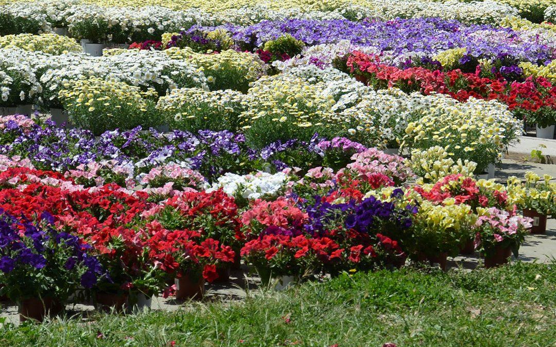 Oferta de plantas ornamentales por semanas