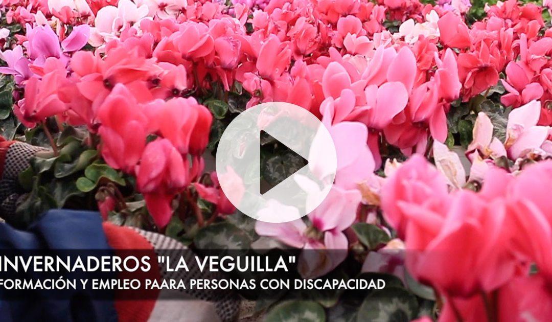 Vídeos de La Veguilla