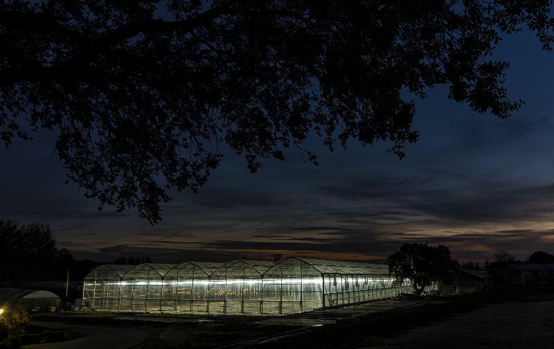 Espectacular imagen nocturna del nuevo invernadero de La Veguilla