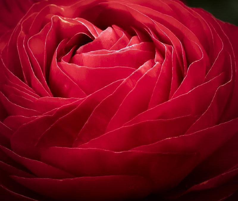 Nuevas fotos de flores desde el vivero de La Veguilla